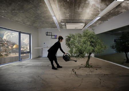 3. Nation Estate - Olive Tree.jpg