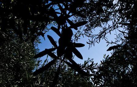 Olives_Blog_pic_6_0.jpg