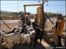 _47318595_wb1702_sheep_226_getty.jpg