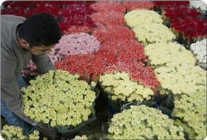 images_News_2011_04_12_Gaza-flowers_300_0.jpg
