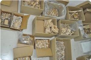 images_News_2011_06_20_bones_300_0.jpg